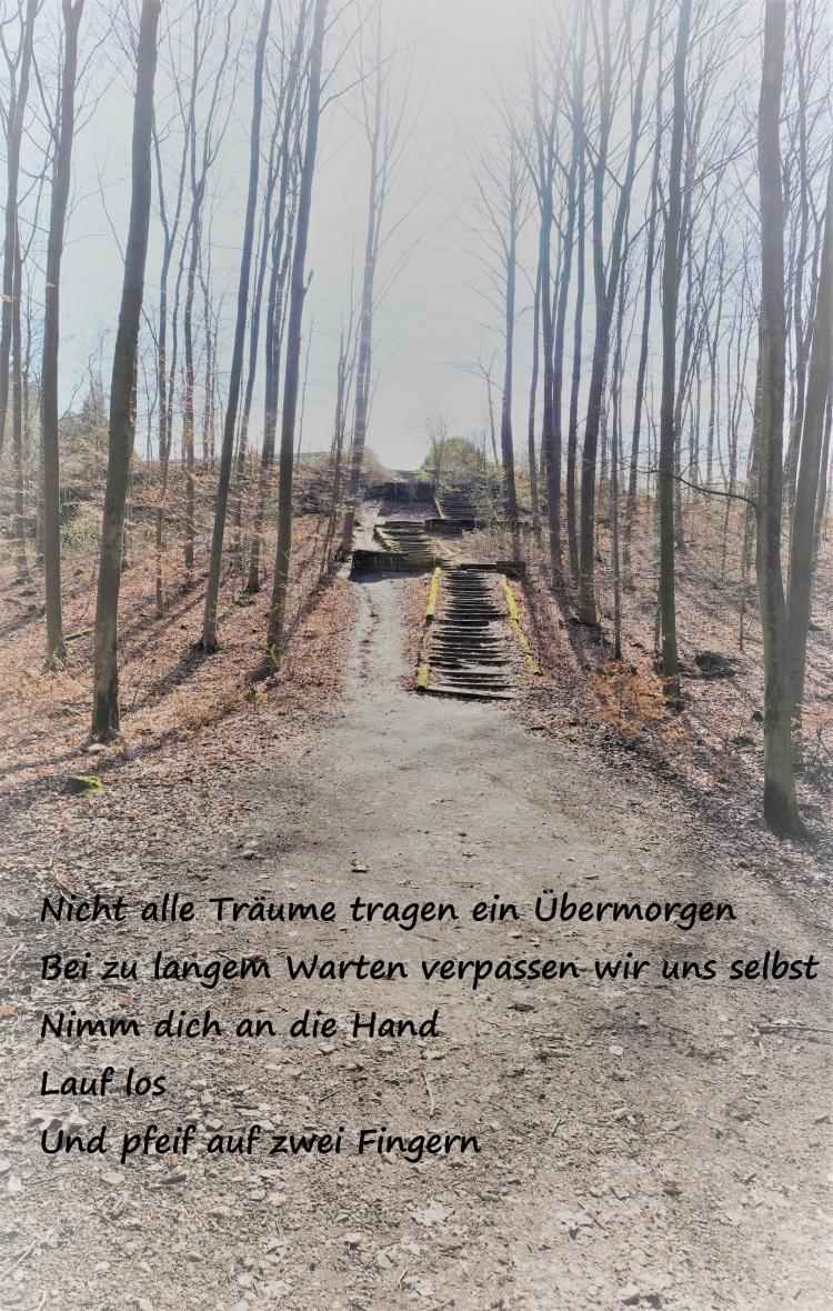 Wald Treppe B