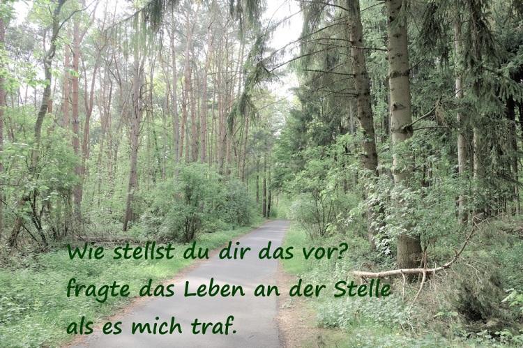 Weg Wald Sü