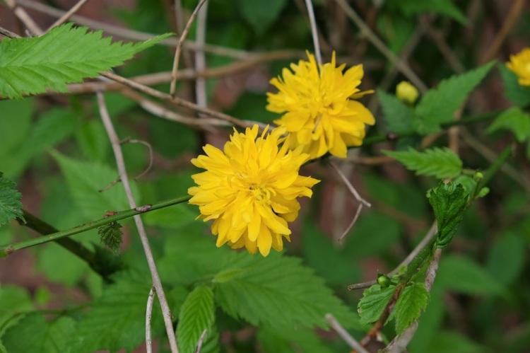 Blumen G