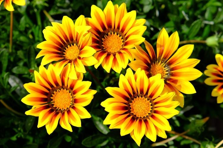 Blumen ge