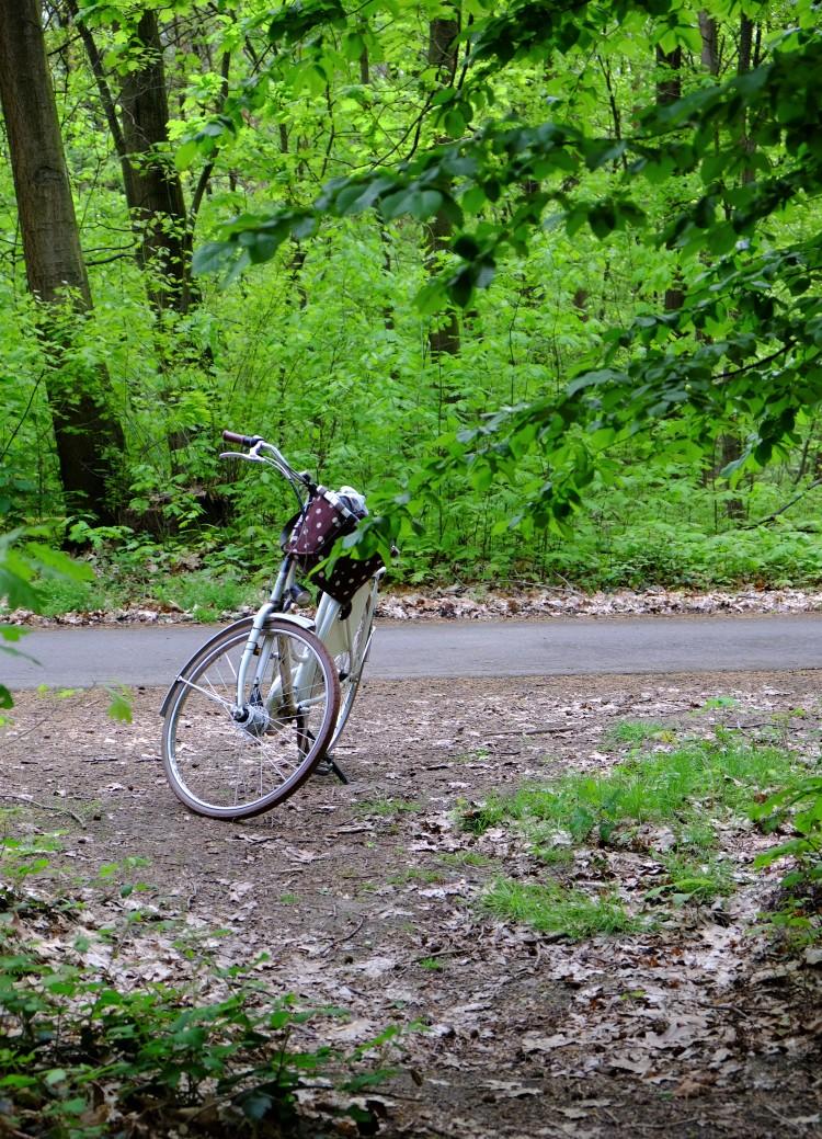 Wald Rad