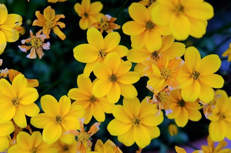 Blumen gelb T