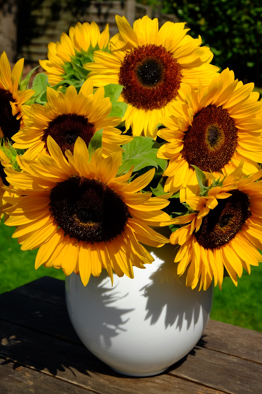 Sonnenblumen Geb.