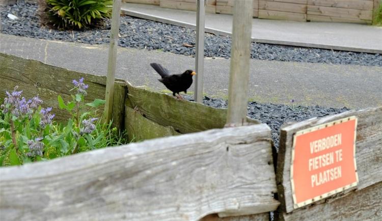 Vogel Schild