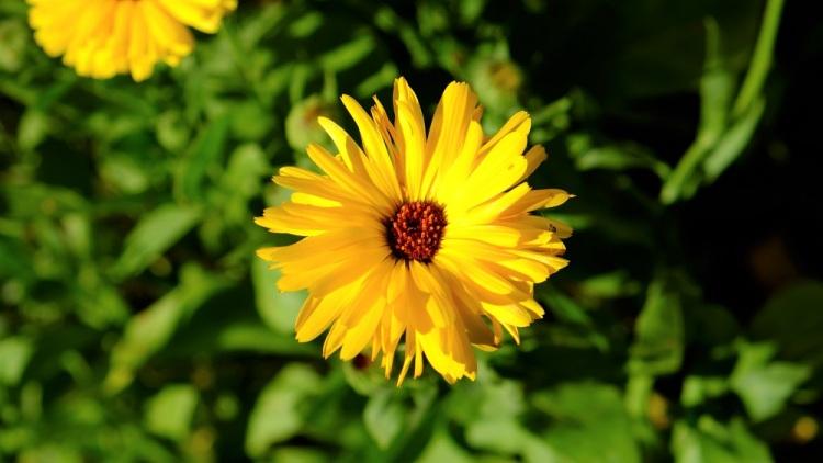 Blume Herbst