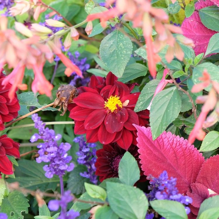 Blumen Herbst