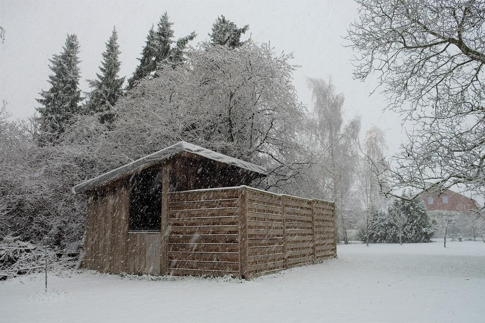 Schnee P