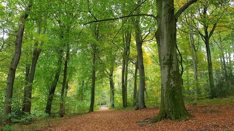 Wald Dreiländerpunkt