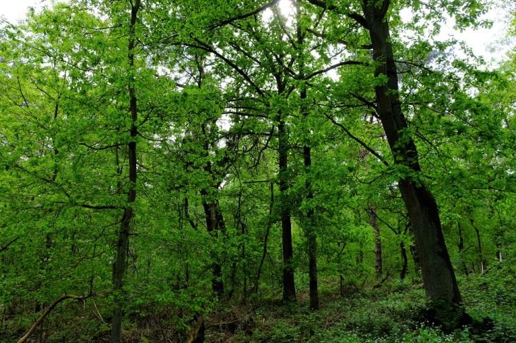 Wald Sue