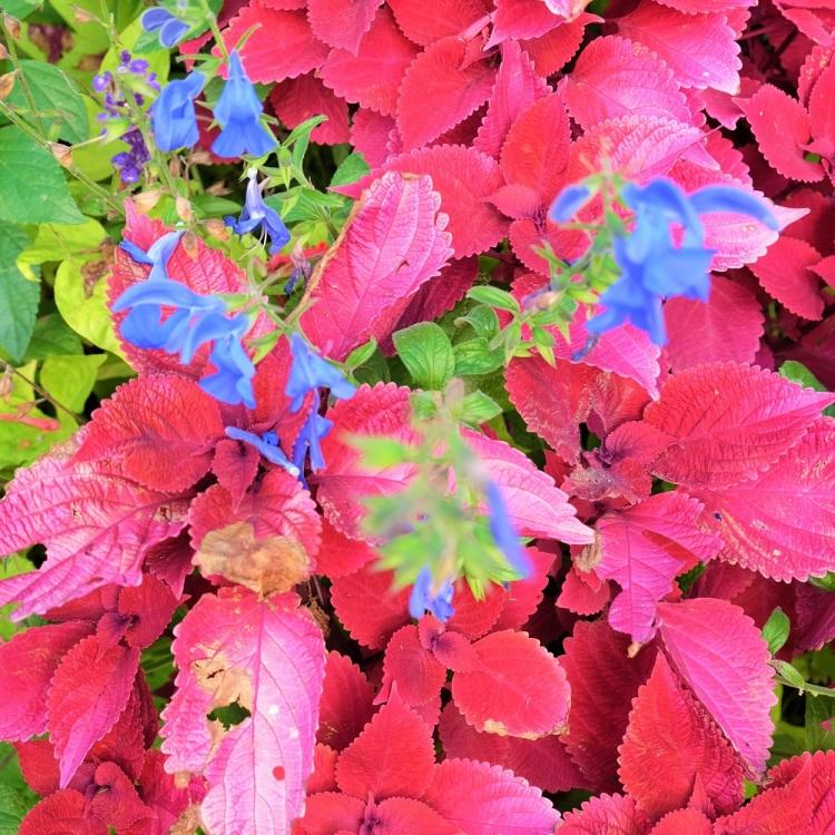 Blumen Herbst L