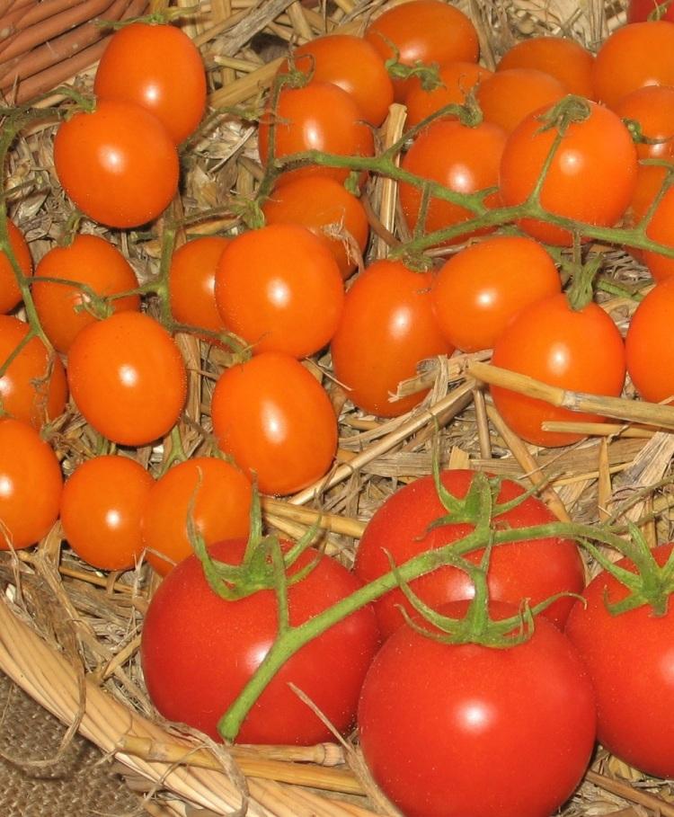Tomaten L