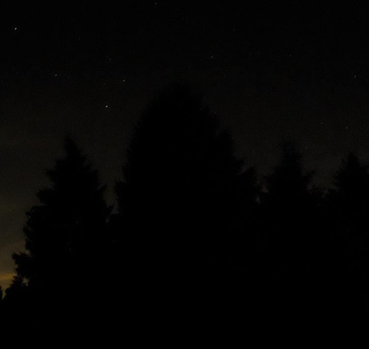 Wald dunkel