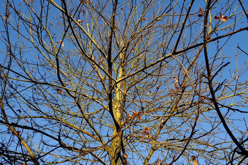 Baum Himmel blau