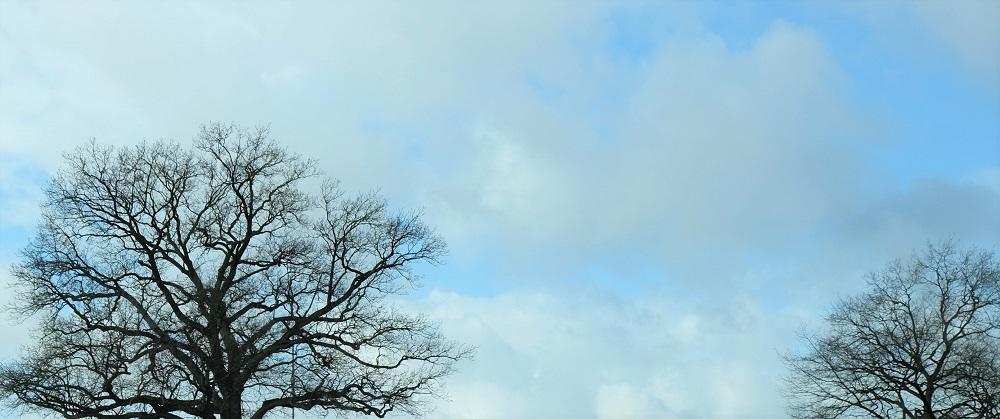 Baum Himmel