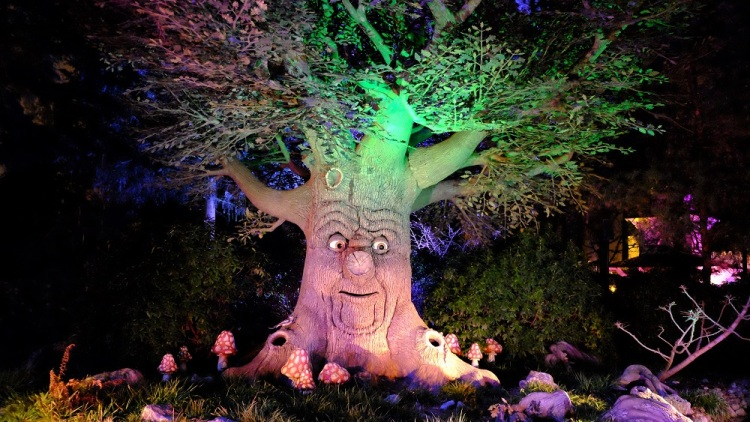 Baum Eft.
