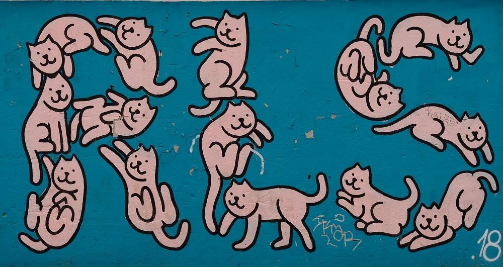 Katzen B