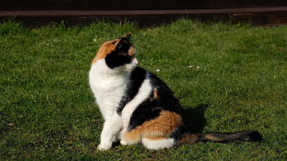 Katze
