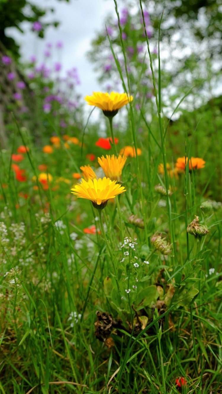 Blumen Wildwiese